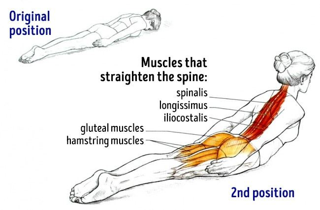 Exercises For Posture and Back Pain Relieve